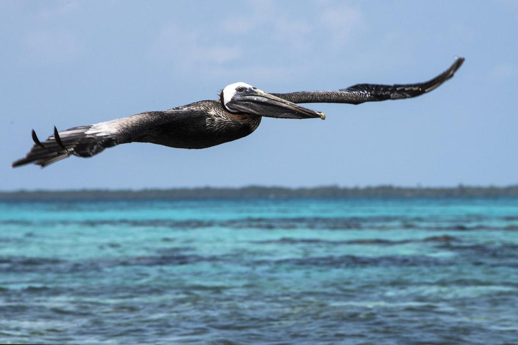 Meeresflug